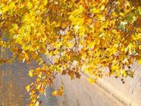 外壁塗装ラボの金色紹介