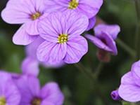 色について(紫色の花)