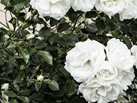 外壁塗装の白色
