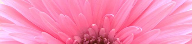 足立区の花育カリキュラム「一花一葉」