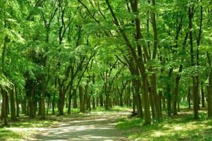 千葉県市川市は神隠しで有名な森がある土地