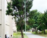埼玉県ふじみ野市団地の街灯の塗装工事の施工事例(2020/06/10)